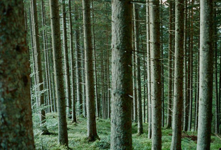 austriatrees